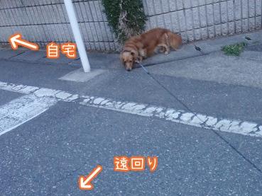 kinako2392.jpg