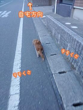 kinako2394.jpg