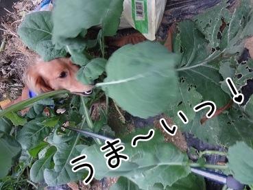 kinako2420.jpg