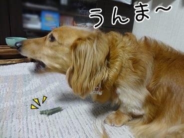 kinako2577.jpg