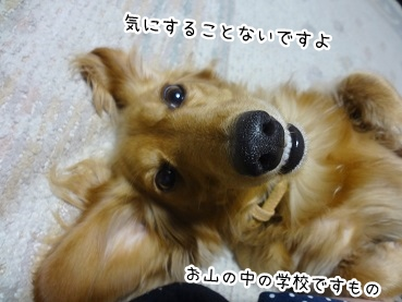 kinako2625.jpg
