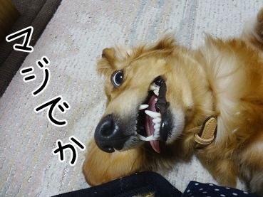 kinako2628.jpg