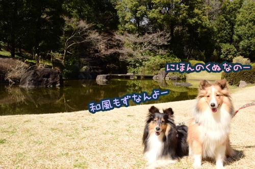 DSC_0010_201504011057473f6.jpg
