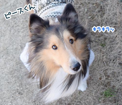 DSC_0021_20150110205939cb1.jpg