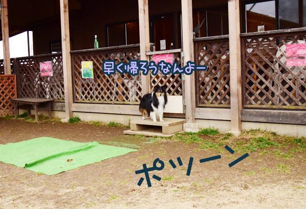 DSC_0053_20150311220718aec.jpg