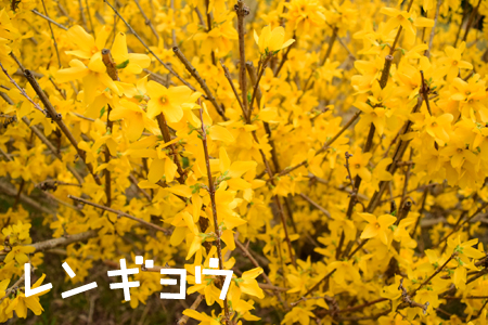 DSC_0093_2015040413042166e.jpg