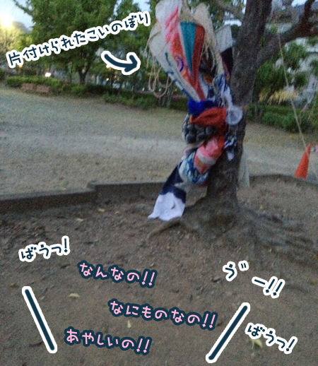 S__10600452.jpg