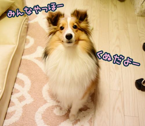 kunutan_1.jpg