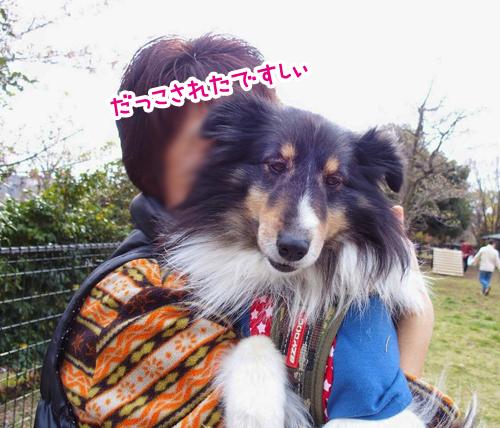 myhome2_2015041615154692d.jpg