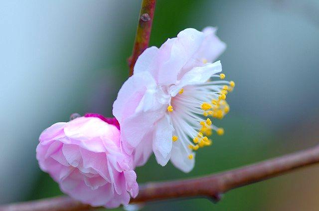 庭に咲く花たちよありがとう。