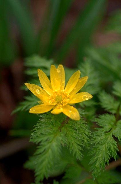 Piccola primavera 小さい春 2
