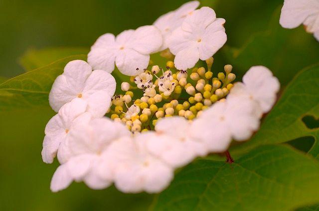 季節に花咲いて 1