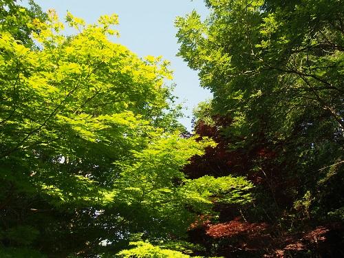 nakayasumi15710.jpg