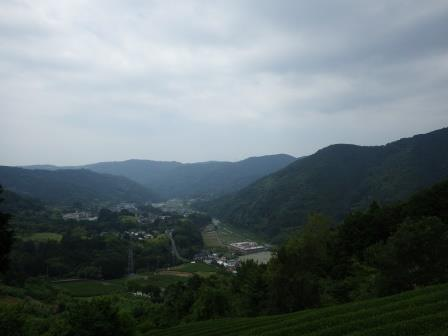IMGP2240 茶畑