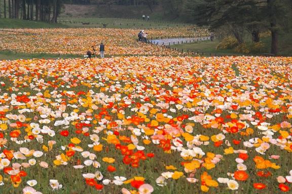 花鳥風月を学校で教育しない都道府県