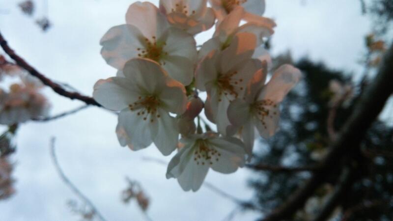 fc2_2015-04-04_00-39-34-221.jpg