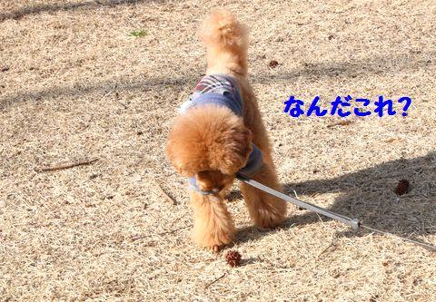IMG_46612.jpg