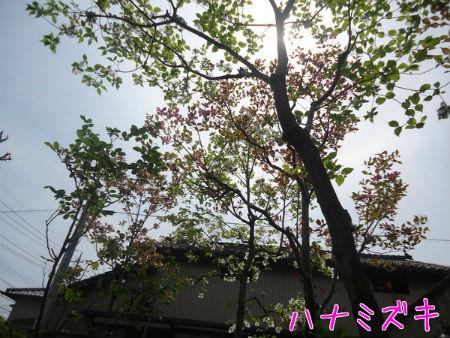 2015042421210164a.jpg