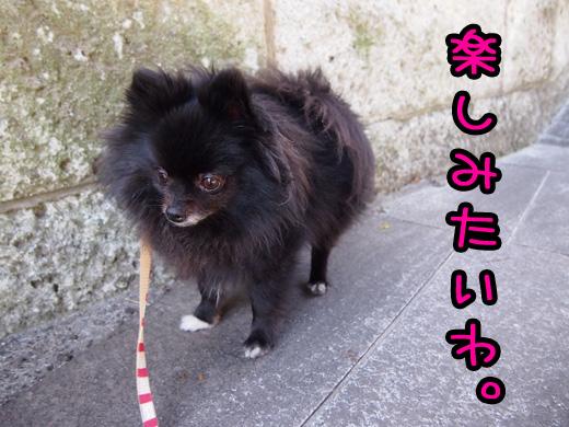 chottowatanosimitaiwaharu.jpg