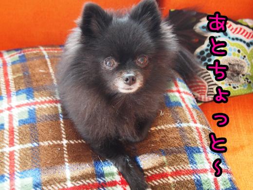 kotosimoatochotto_201412230122589da.jpg