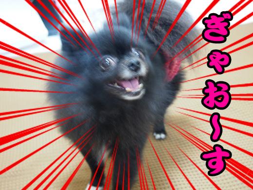 kyounogyaosu.jpg
