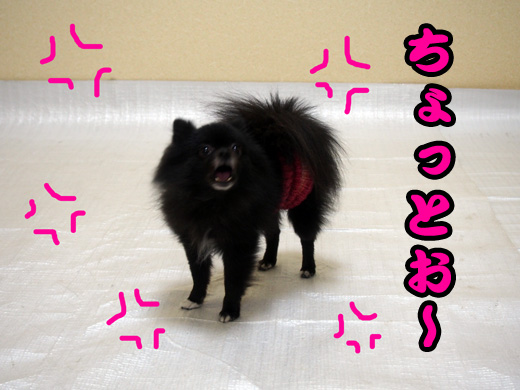 supersaiyagyaosu.jpg