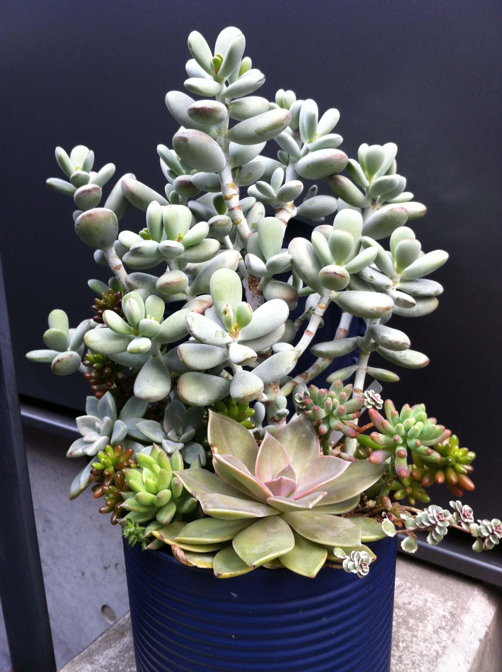 succulent20150225a.jpg