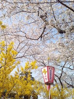 桜・黄色い花