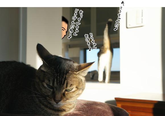 ちび、猫を被る