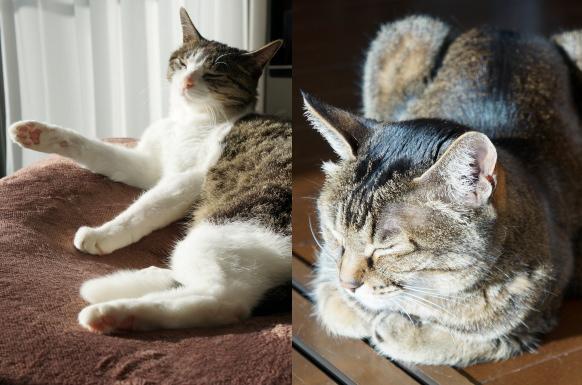 G「アタシを見て」 A「猫は香箱でしょ」
