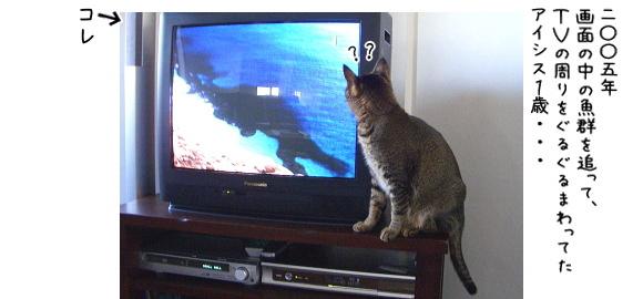 魚が逃げた!