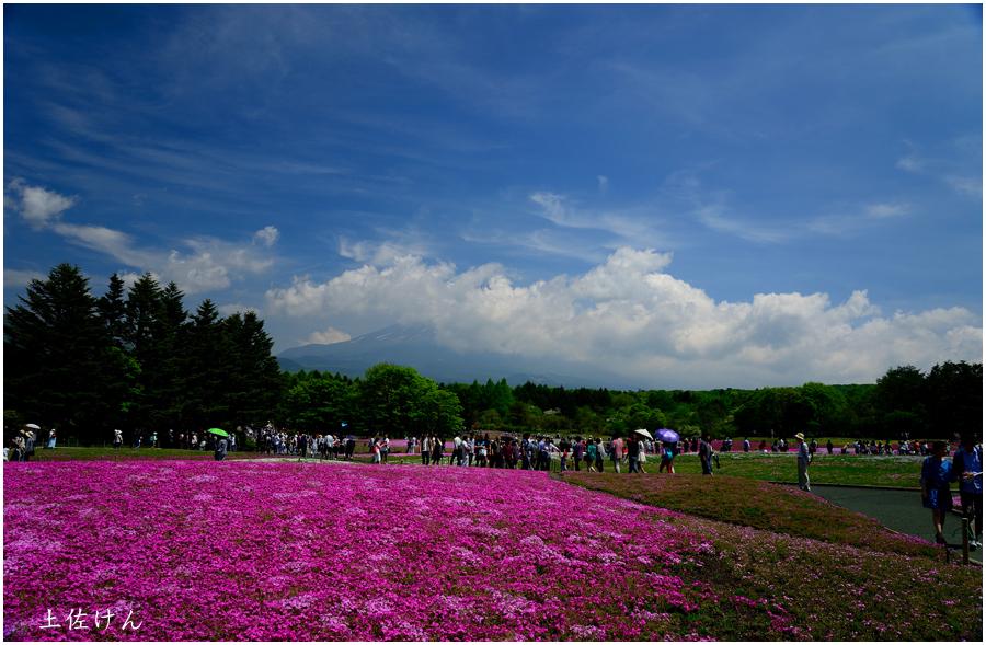 富士芝桜祭り3