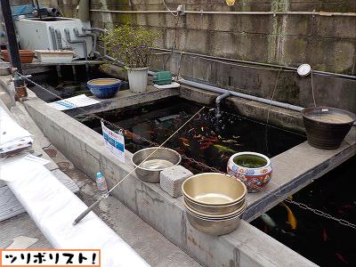 金魚坂002